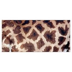 Maasai Giraffe Spots Poster