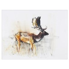 Magnificent Fallow Buck, 2006 (charcoal Poster