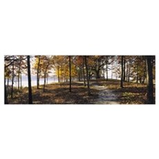 Trees in a forest, Sleeping Bear Dunes National La Poster