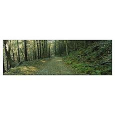 Trees in a national park, Shenandoah National Park Poster