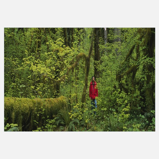 Man walking in a rainforest, Olympic National Park