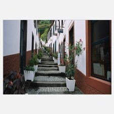 Potted plants along a staircase, Sao Vicente, Made
