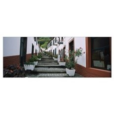 Potted plants along a staircase, Sao Vicente, Made Poster