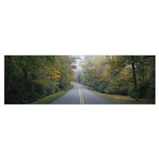 Trees along a road, Blue Ridge Parkway, North Caro Poster