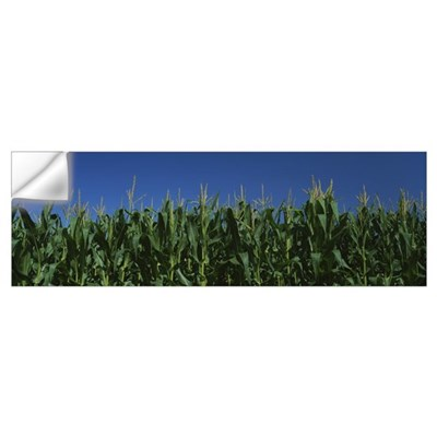 Corn crop in a field, New York State Wall Decal