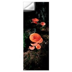 High angle view of Fly Agaric mushrooms, French Ri Wall Decal