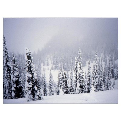 Hurricane Ridge Washington Wall Art Poster