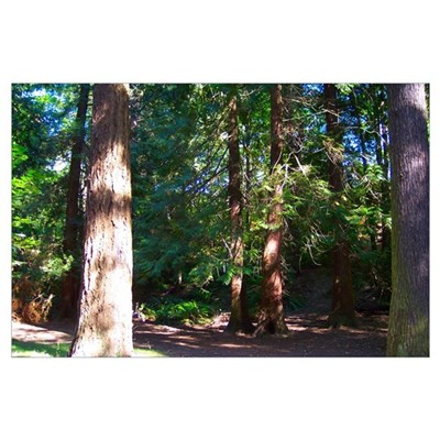 Cornwall Park Trees Wall Art Poster