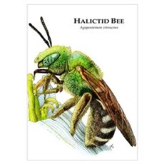 Halictid Bee Wall Art Poster