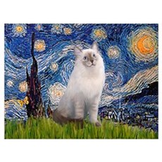 Starry Night Ragdoll Wall Art Poster