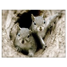 Baby Squirrels Wall Art Poster