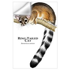 Ring-Tailed Cat Wall Art Wall Decal