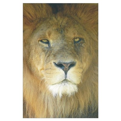 Lion Wall Art Poster