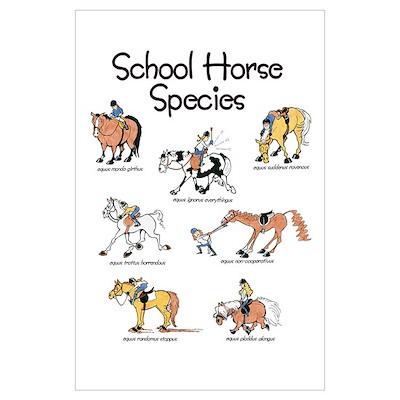 School Horse Species Wall Art Poster