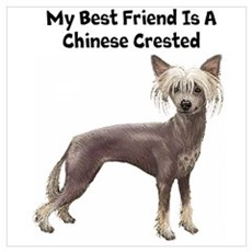 Chinese Crested Wall Art Framed Print