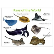 Rays of the World Wall Art Canvas Art