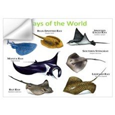 Rays of the World Wall Art Wall Decal