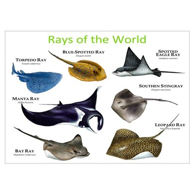 Rays of the World Wall Art Poster