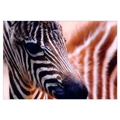 Zebra Wall Art Canvas Art