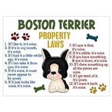 Boston Terrier Property Laws 4 Wall Art Poster