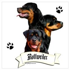 Rottie 4 Wall Art Poster