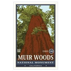 Muir Woods 3 Wall Art Poster