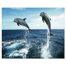 Dolphin Diving Wall Art Framed Print