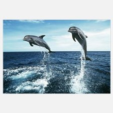 Dolphin Diving Wall Art