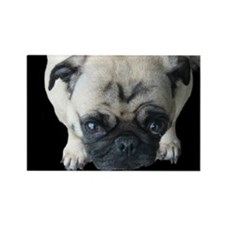 Pretty Please! Pug Rectangle Magnet