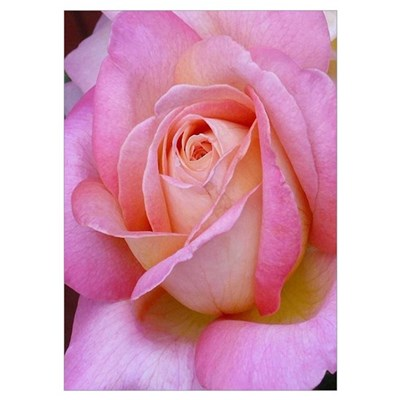 Pink Palette Rose Wall Art Poster