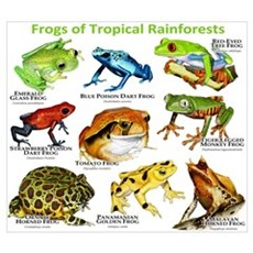 Frogs of the Tropical Rainforests Wall Art Poster