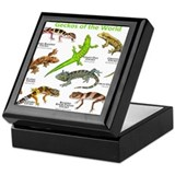 Gecko Keepsake Boxes
