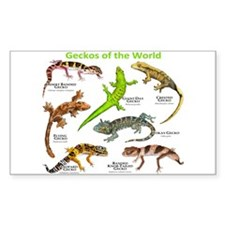 Geckos of the World Decal