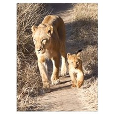 Tsalala Female And Cub Wall Art Poster
