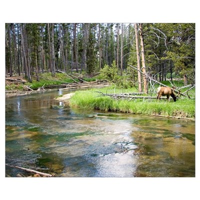 Elk by River Wall Art Poster
