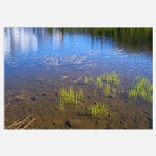Picture Lake Grasses Wall Art