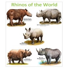 Rhinos of the World Wall Art Poster