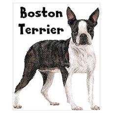 Boston Terrier Wall Art Poster
