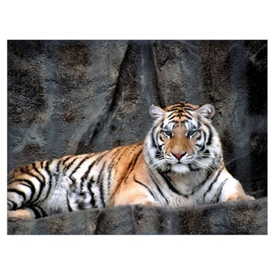 Resting Tiger Wall Art Poster