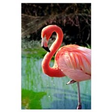 Flamingo Neck Wall Art Poster