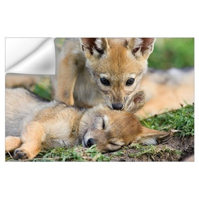 Black-backed Jackal (Canis mesomelas) pups, six we Wall Decal