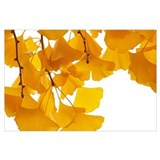 Ginkgo leaf Wrapped Canvas Art