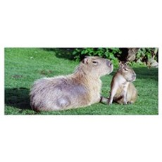Capybara Mom and Son Wall Art Poster