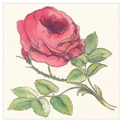 Vintage Rose Drawing Wall Art Poster