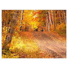 Autumn in U P Michigan Wall Art Poster