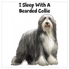 Bearded Collie Wall Art Poster