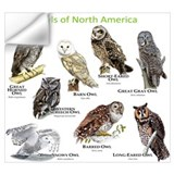 Birds of prey Wall Decals