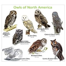 Owls of North America Wall Art Poster