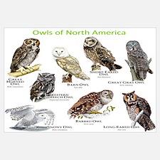 Owls of North America Wall Art