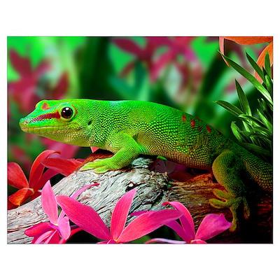 Gecko Lizard Wall Art Poster